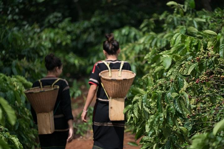 Cà phê Buôn Ma Thuột - Tây Nguyên huyền thoại - 3